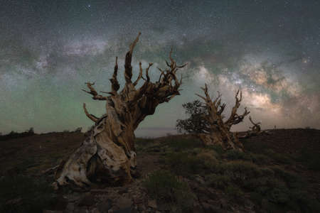 Milky Way Galaxy panoramic over Ancient Bristlecone Pine Forest in California