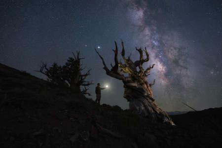 Man standing under an Ancient Bristlecone Pine Tree