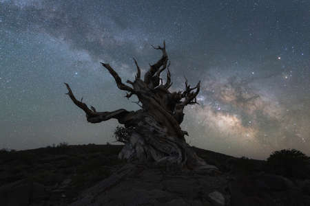 Creepy and twisted tree silhouette with the Milky Way Galaxy in the background
