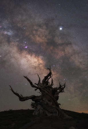 Silhouette of old creepy tree in front of the Milky Way Galaxy