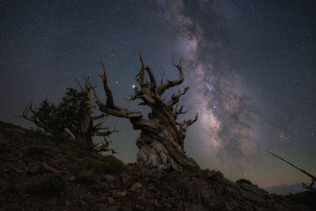 Creepy tree silhouette against the Milky Way Galaxy in Bishop California