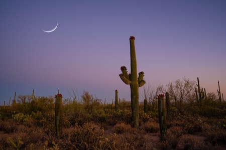 Beautiful saguaro cactus from Desert Discovery Trail in Tuscon Arizona Stock fotó