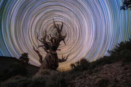 Long exposure Star Trail behind an Ancient Bristlecone Pine Forest in California on a clear night Stock fotó