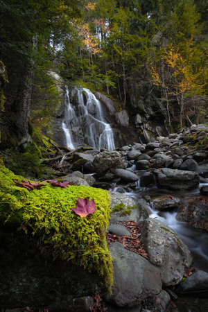 Red leaf on a moss log in front of Moss Glen Falls in Vermont Stock fotó