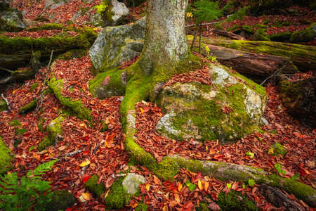 Moss growing on tree roots with fall foliage surrounding it