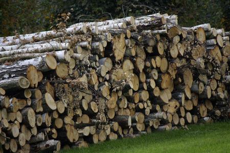 saxon: Wood - Saxon Switzerland.