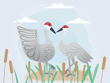 Couple of sandhill crane and cattail,vector illustration for Valentine's day.