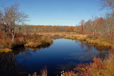 Tobyhanna Creek - Fall
