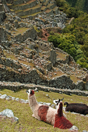 inca: Inca Ruins - The Inca Trail