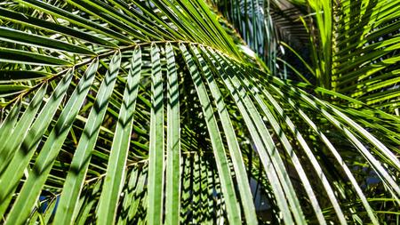 Palm blade ren