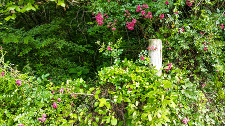 tennesse: Tennessee flores y la cerca Foto de archivo