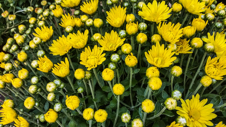 daisys: Potted Plants