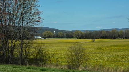 kentucky: Kentucky Farm