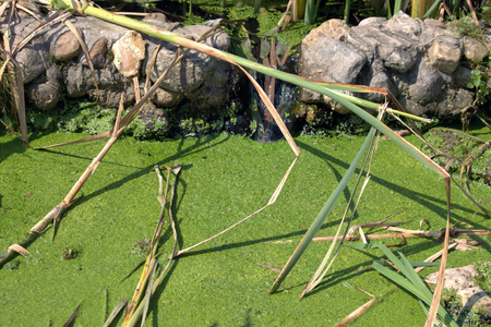 brooks camp: A small creek overgrown with duckweed occurs near Moscow