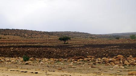 Ethiopia, stone field, tree, rocks, stones