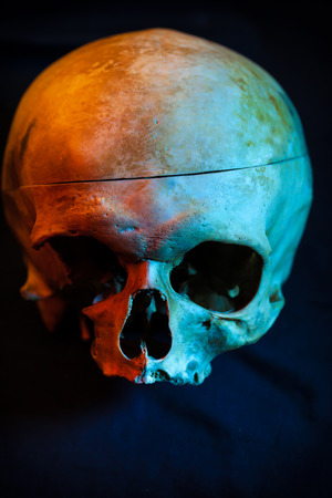 living skull: Sketch tattoo. To create tattoos.Human skull for a tattoo on a black background.Halloween background