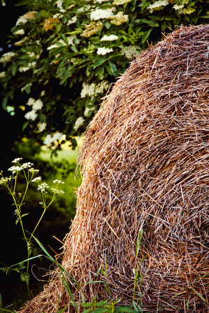 A haystack lies on the beautiful green lawn with trees