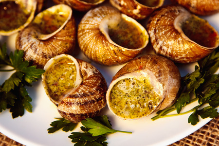Escargots de Bourgogne - Snails with herbs butter, gourmet dish in French traditional  with parsley and bread on white platter