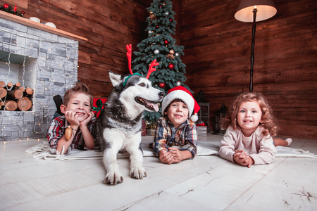 Beautiful children play with the dog of breed Husky New Year interior with Christmas tree and fireplace