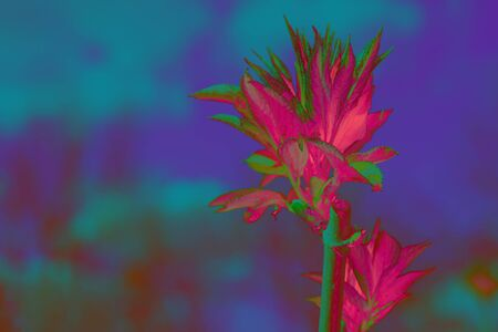 Creative fluorescent color layout made of fresh leaves. Blue and pink neon colors. Nature concept.