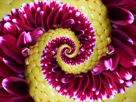 Vinous yellow flower spiral abstract abstract fractal effect pattern background. Floral spiral abstract pattern fractal. Incredible green flowers spirally incredible background