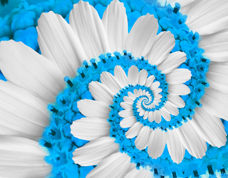 White blue flower swirl camomile daisy kosmeya flower spiral abstract fractal effect pattern fractal background. Twisted blue pastel flower spiral twirl. Distorted surreal flower floral background