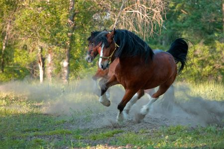Two horses in movement photo