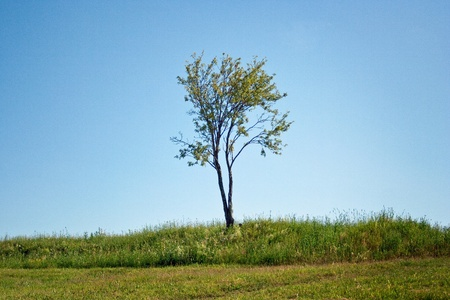 single young tree stands on the background of a cloudless sky photo
