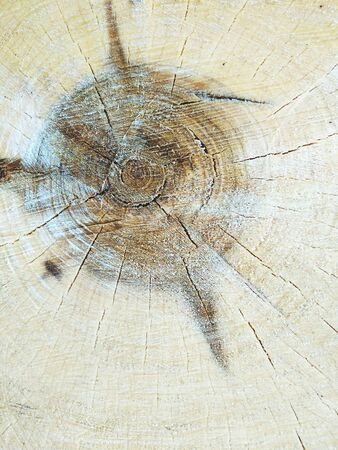 Cracked in the form of a web, a transverse saw cut of a tree. The structure of tree growth rings. Background from a saw cut tree.