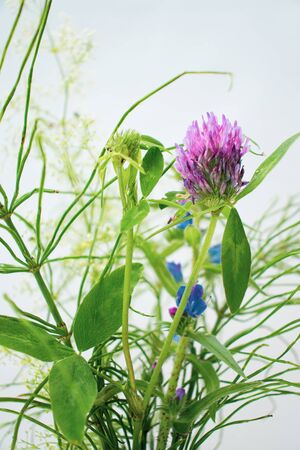 Bright colors of a hot summer. Bouquet of field and meadow plants. Bright green herbs.