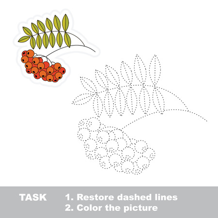 ashberry: Vector ashberry to be traced. Restore dashed line and color the picture.