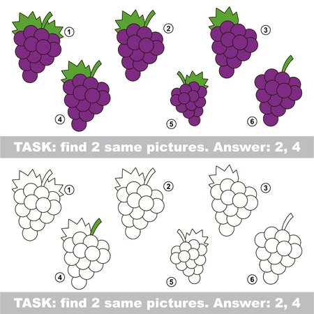 Design different, color equal.  Vector visual game. Task and answer. Find two similar Grapes
