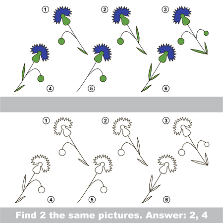 similar: The design difference.  Vector visual game. Task and answer. Find two similar Cornflowers