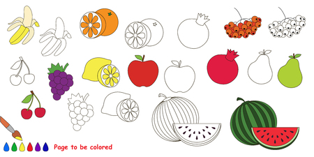 colorless: Fruit set. Big coloring book. Colorless and colorful set in vector.