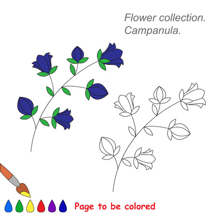 campanula: Campanula in vector cartoon to be colored. Coloring book for children.