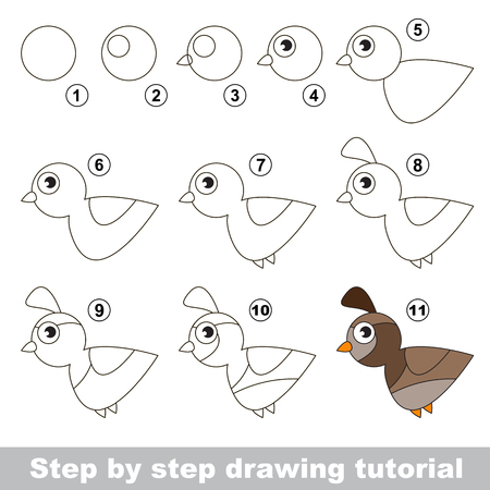 Drawing tutorial for children. How to draw the funny Quail