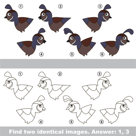 The design difference. Vector visual game for kid education. Simple level of difficulty. Easy educational game. Task and answer. Find two similar Quails. Ilustração