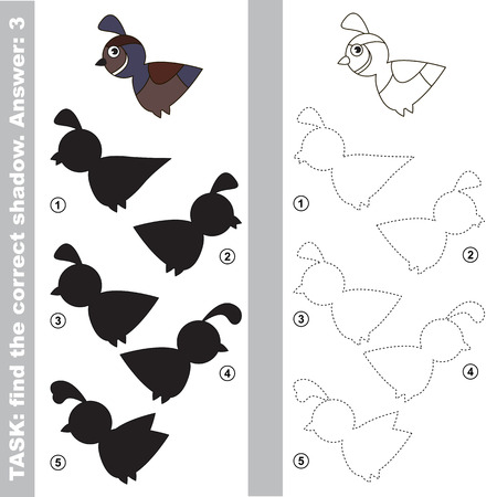 one level: Quail with different shadows to find the correct one. Compare and connect object with it true shadow. Easy educational kid gaming. Simple level of difficulty. Visual game for children. Illustration