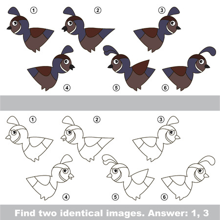 similar: The design difference. Vector visual game for kid education. Simple level of difficulty. Easy educational game. Task and answer. Find two similar Quails. Illustration