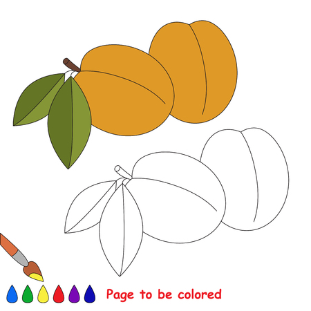 primary education: Apricot to be colored. Coloring book to educate kids. Learn colors. Visual educational game. Easy kid gaming and primary education. Simple level of difficulty. Coloring pages.