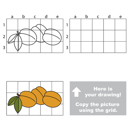 apricots: Copy the picture using grid lines. Easy educational game for kids. Simple kid drawing game with Apricots Illustration