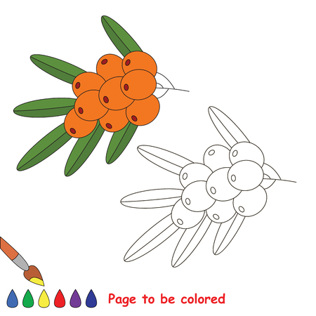 Educational worksheet to be colored by sample. Easy educational paint game for preschool kids. Simple kid coloring page with Buckthorn