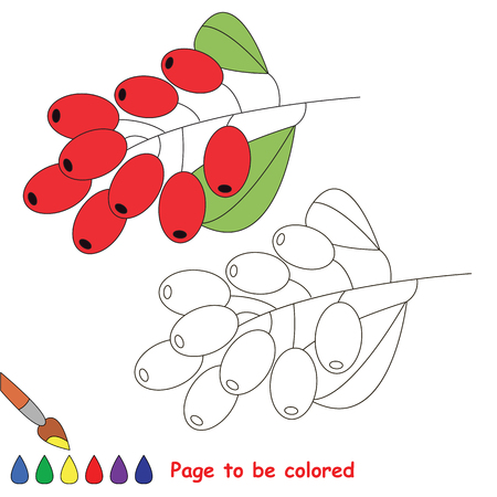 Educational worksheet to be colored by sample. Easy educational paint game for preschool kids. Simple kid coloring page with Barberry. Stock Photo