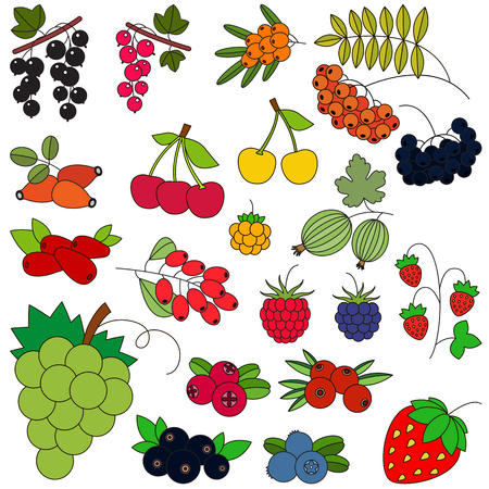 chicouté: Berry set in vector, the colorful version.