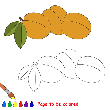 Three apricots to be colored. Coloring book to educate preschool kids. Easy kid educational gaming and primary education of simple level of difficulty.