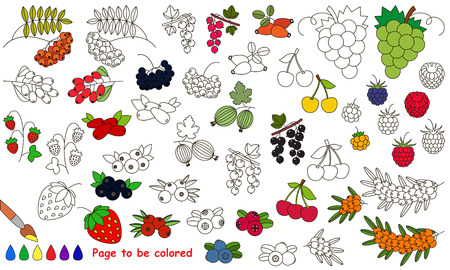chokeberry: Berries set to be colored. Coloring book to educate kids. Learn colors. Visual educational game. Easy kid gaming and primary education. Simple level of difficulty. Coloring pages.