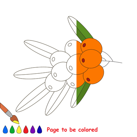 Buckthorn in vector to be traced, restore dashed line and color the picture, the simple visual game with easy education game level for preschool kids. Illustration