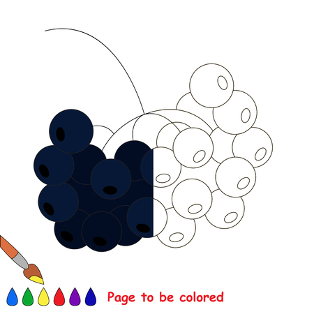 chokeberry: Black Rowan, the coloring book to educate preschool kids with easy gaming level, the kid educational game to color the colorless half by sample.
