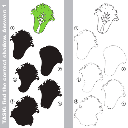 Salad Lettuce with different shadows to find the correct one, compare and connect object with it true shadow, the educational kid game with simple gaming level.