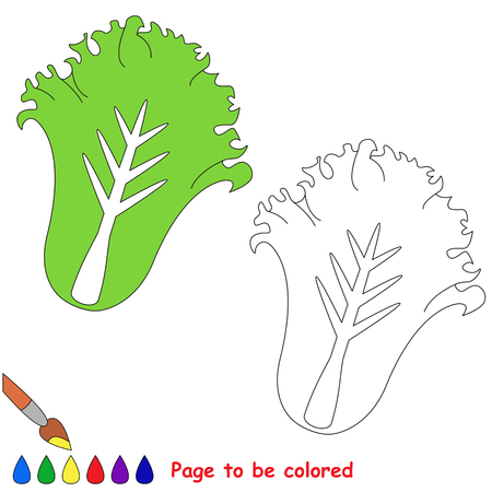 Green Lettuce to be colored, the coloring book for preschool kids with easy educational gaming level. Banco de Imagens - 80177806